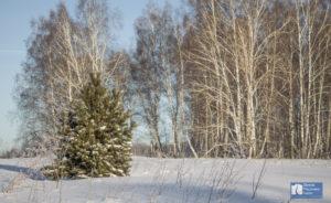 За елкой на джипе @ Novosibirsk